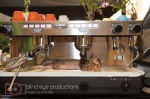Parchita takes a nap in the cappucino machine
